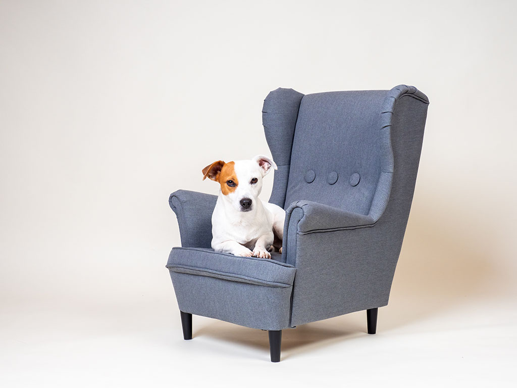 dog sitting in small winged arm chair